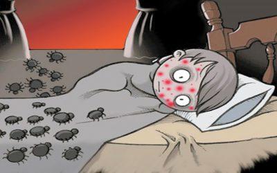 Invasi dalle cimici? Vai con i repellenti naturali!